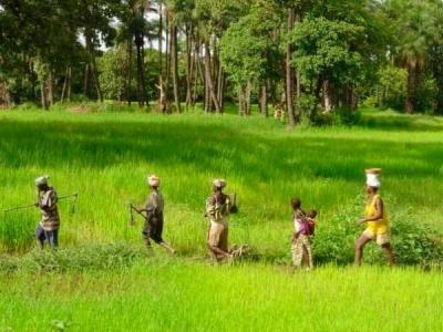 riziculture.jpg